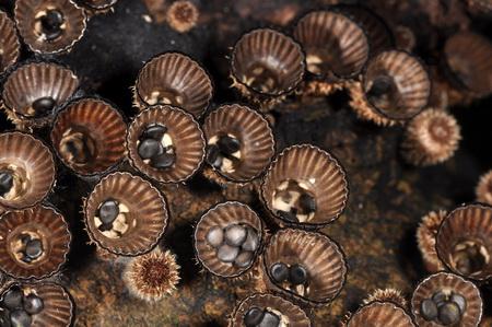 jamur-tanah